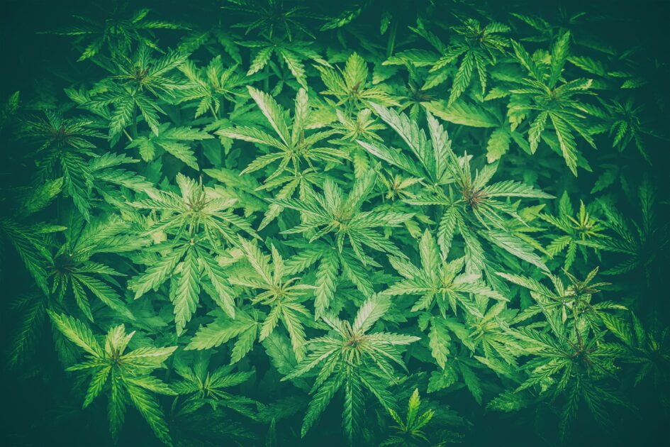 Weed Possession Charges: Massachusetts vs. USA